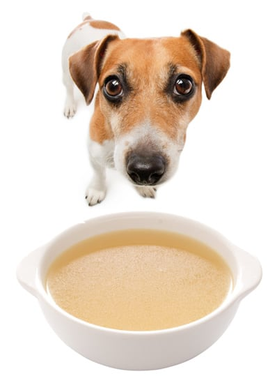 5 Reasons Broth is Healthy for Dogs