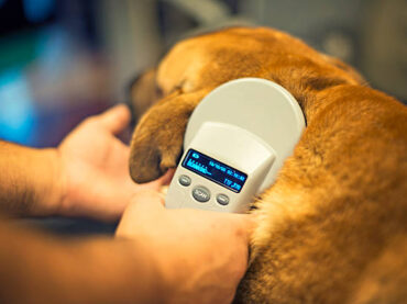 Why You Need to Microchip Your Dog Or Cat
