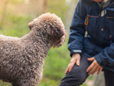 How to Teach Your Dog to Recall (Come Back): Top Tips