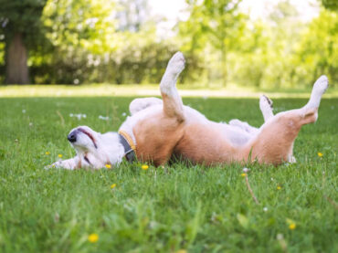 7 Spring Hazards for Dogs