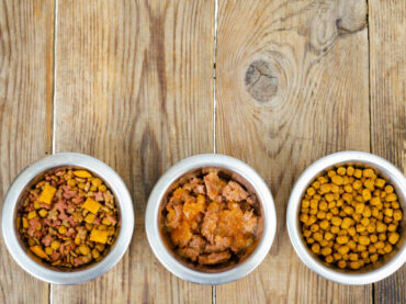 Healthiest Foods to Give Your Dog