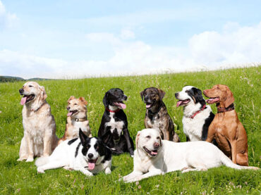 Which Dog is Best for Your Family?