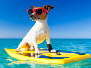 Keep Your Dog Safe On Summer Road Trips